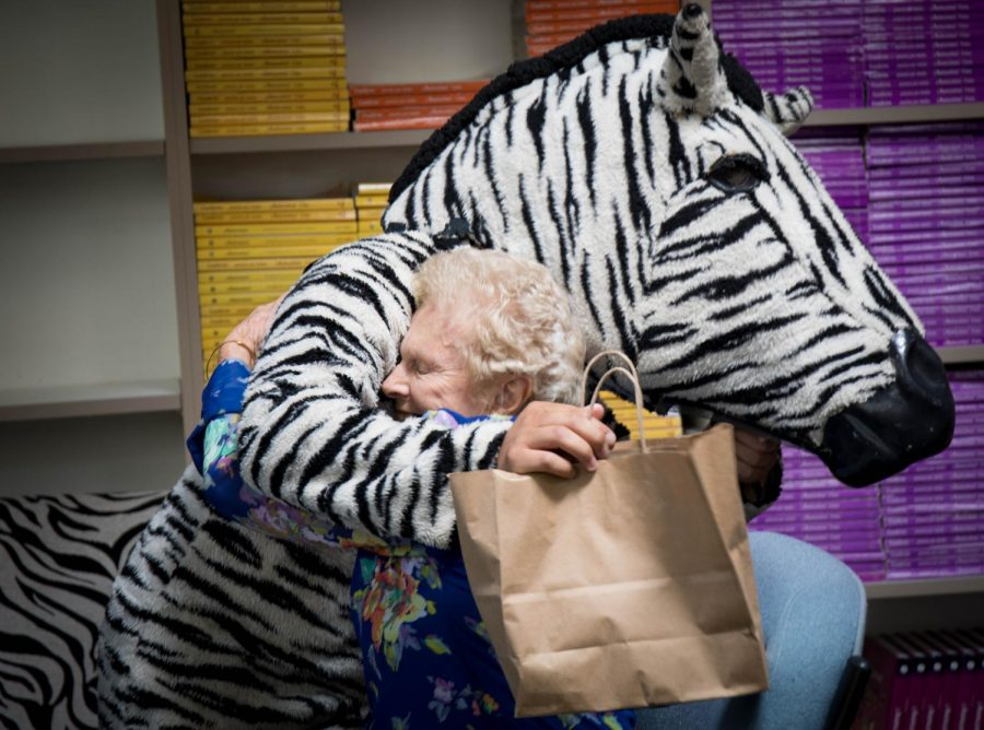 Photos of 100 Year Old Zebra Visit